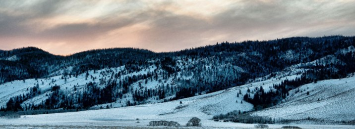 cropped-winterdelight3.jpg