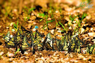 ButterflyHeaven5LisaKayPhotography